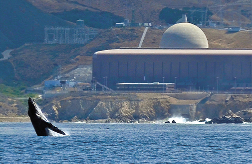 Whale populations have recovered since they were saved by kerosene in the 19th century and palm oil in the 20th century. This whale is swimming in front of the Diablo Canyon nuclear power plant in California
