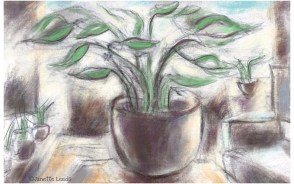 Drawing of a pot plant