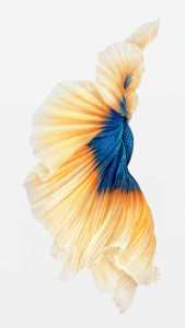 iPhone-6s-Fish-Gold-Wallpaper-576x1024