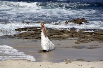 san-diego-bride-2