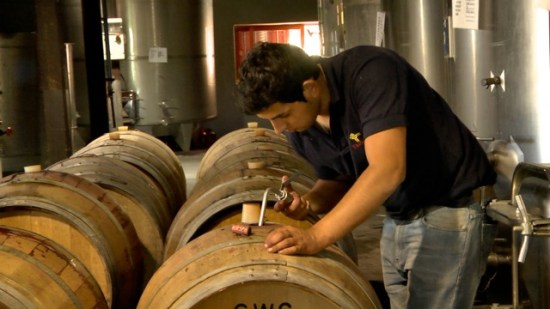 Topping up the barrels at Viña La Reserva de Caliboro, Maule Valley, Chile