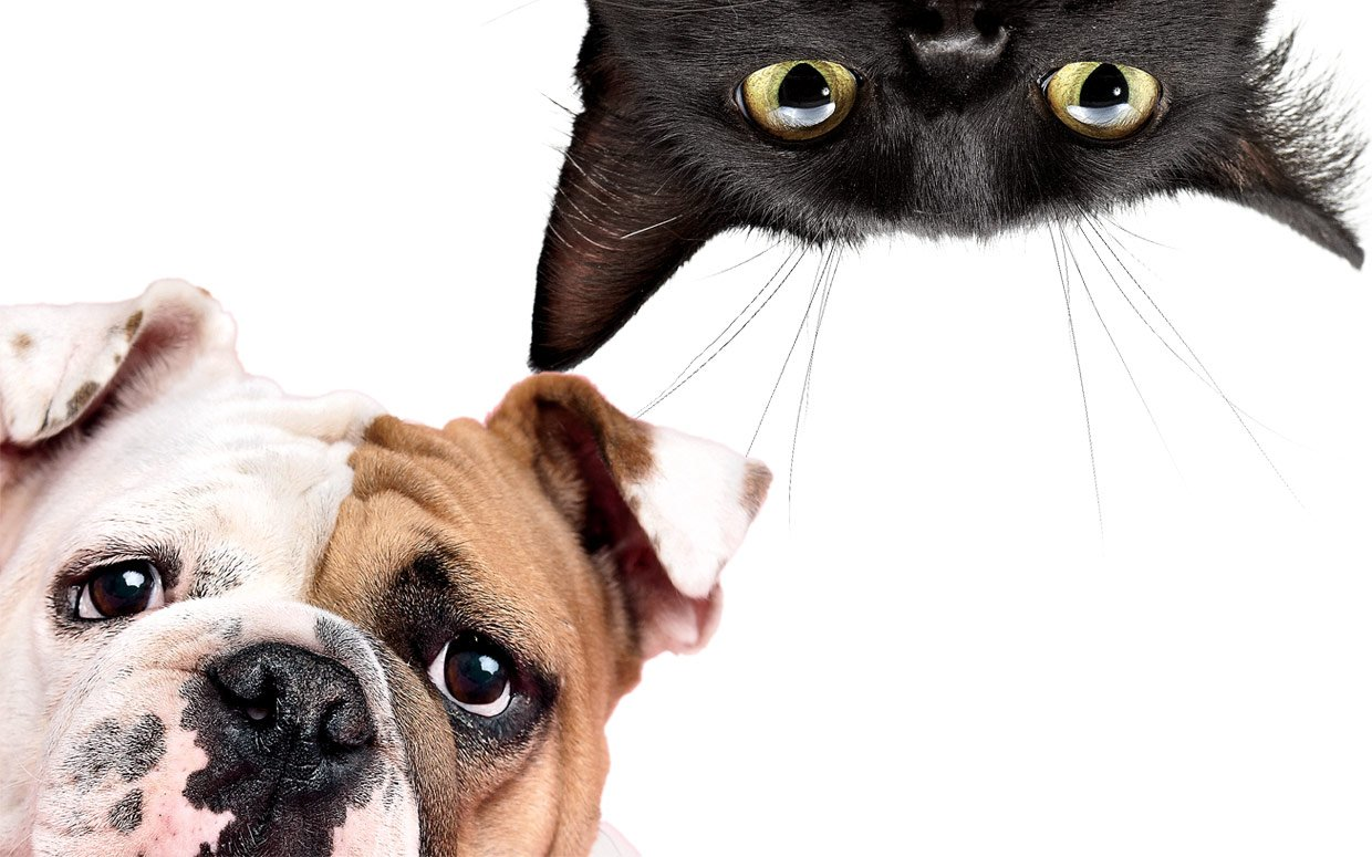 Pet Questions Dog Training Tips About Cats Amp Dogs