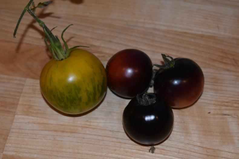 Drivhus tomater