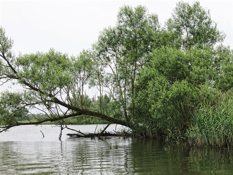 De Biesbosch, natural reserve, national park, the Netherlands, wetland