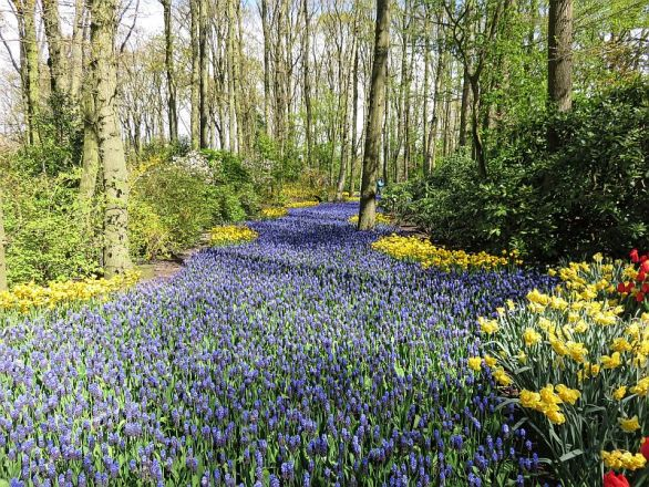 The Blue River in 2016 in Keukenhof