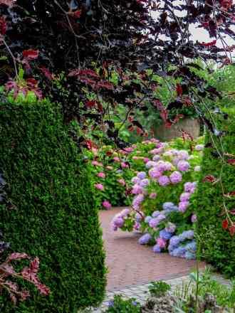 Gardens of Appeltern Hortensia