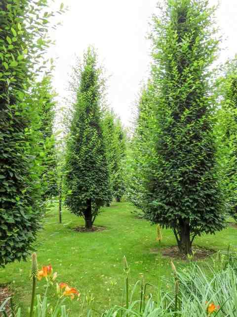 Gardens of Appeltern Trees