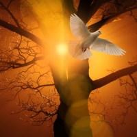 RANI STRELICOM SVOJE LJUBAVI MOJU NUTRINU - Jutarnja molitva
