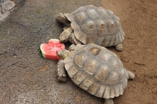 San Valentino al loro Parque di Tenerife Canarie