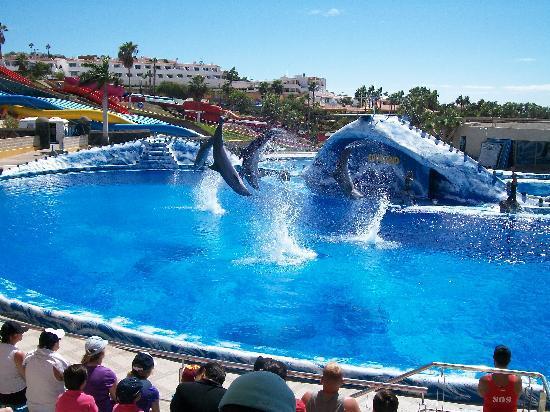 Aqualand Tenerife Show dei Delfini