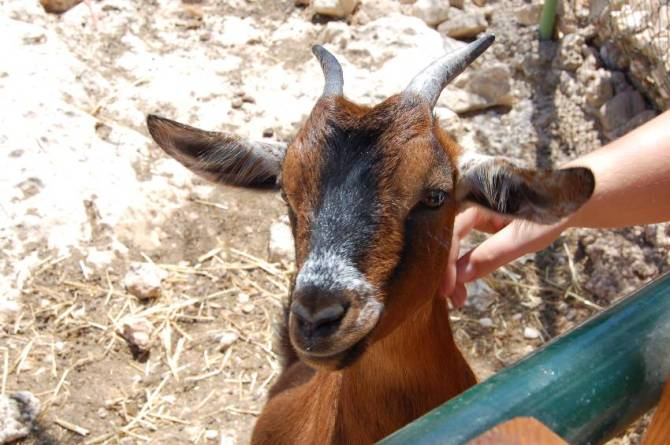 LWS Animal Park di Malta