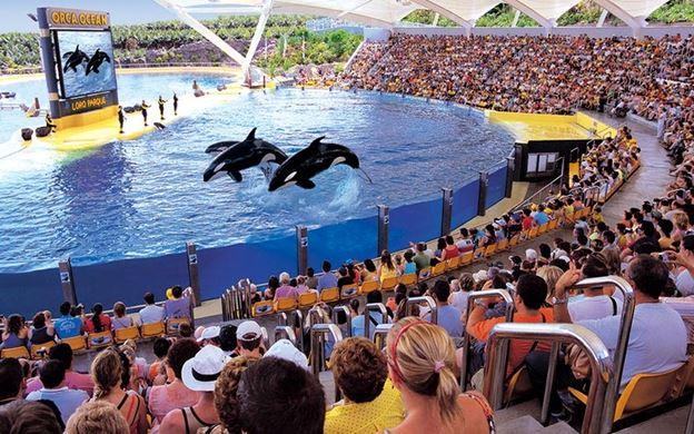 Loro Parque uno dei giardini zoologici di Tenerife nelle isole Canarie