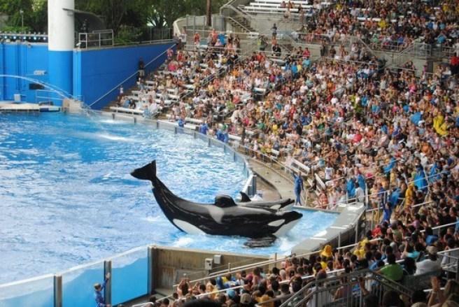 Lo show delle orche del Seaworld Orlando in Florida, una delle attrazioni e spettacoli piu famosi del parco