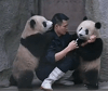 Baby Pandas Refuse Their Medicine