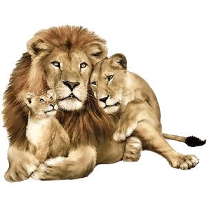 Família de leões