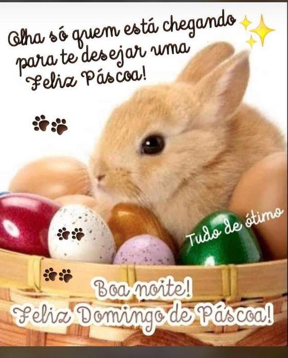 Boa noite Feliz Domingo de Páscoa