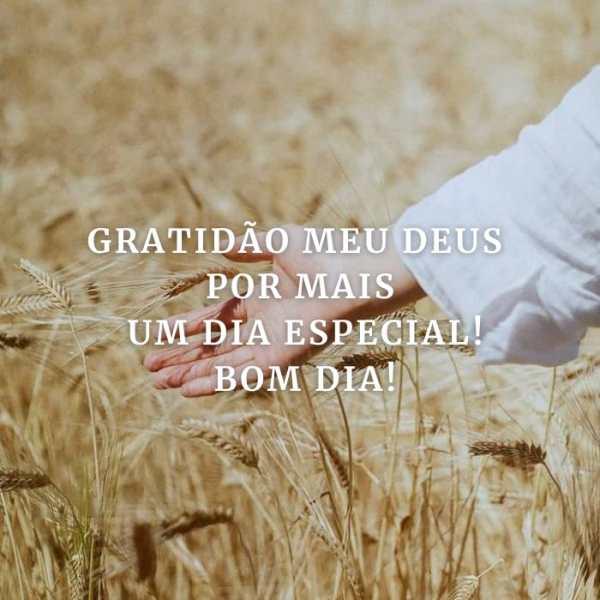 Tenha gratidão por mais um dia especial