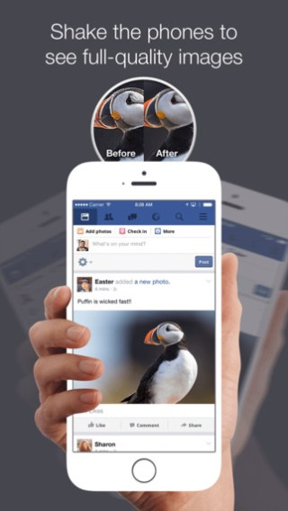 puffin-for-FB