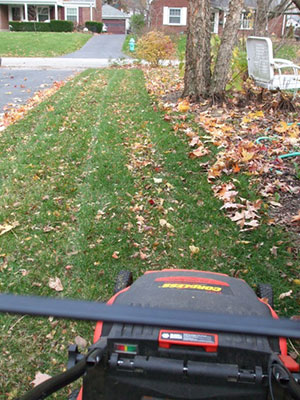Image result for mowing up leaves