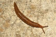 slug4