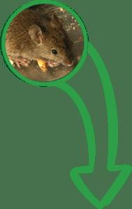 IPM Pros Banner mice