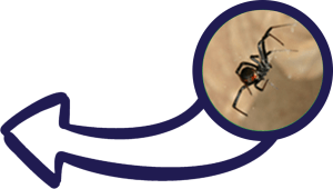 IPM Pros Banner spiders in a house