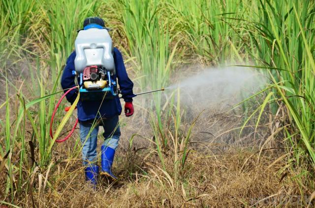 man-spraying-herbicide-on-corn