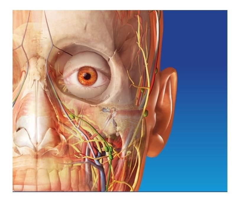 Atlas Anatomía fisiología Humana