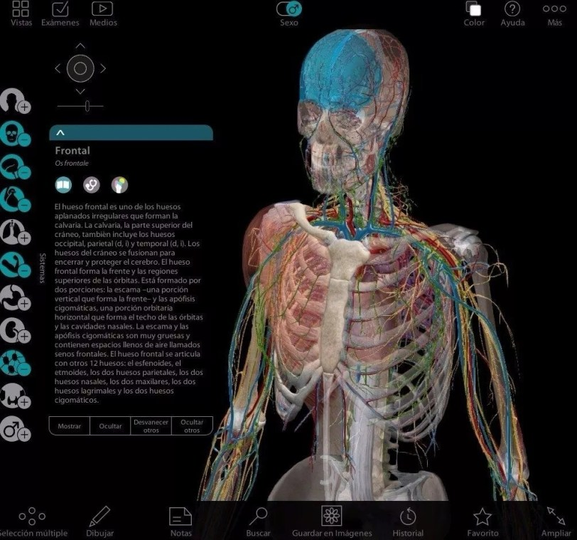 3d-pc-programa-medicina-anatomia-humana-body-atlas-digital- www.iprofe.com.ar/tienda