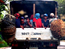 Laborers going home from a Philippine plantation where pineapple is grown for export. Photo by John Cavanagh