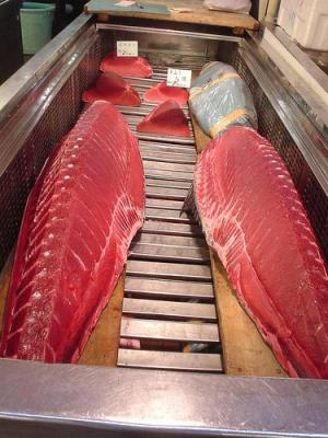 It is not advisable to eat Bluefin Tuna. Photo by tokyofoodcast.