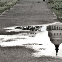 puddle of water showing the reflection of congress