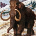 Top 5 reasons I am opposed to cloning woolly mammoths