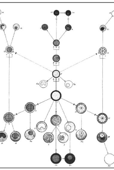 stem cell map, stem cell history
