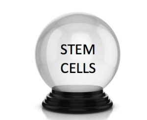 Stem cell predictions