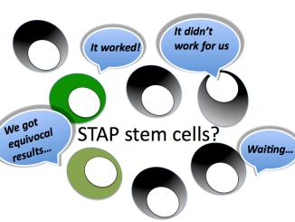 STAP stem cells