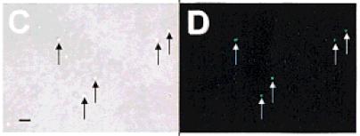 Spore-stem-cells-paper