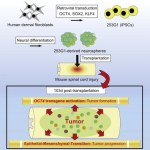 Lessons from New IPS Cell Study Showing Tumors: Choose Methods & Validate Cells Wisely