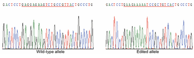 human genetic modification