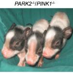 TGIF science links: CRISPR, stem cells, caffeine, & more