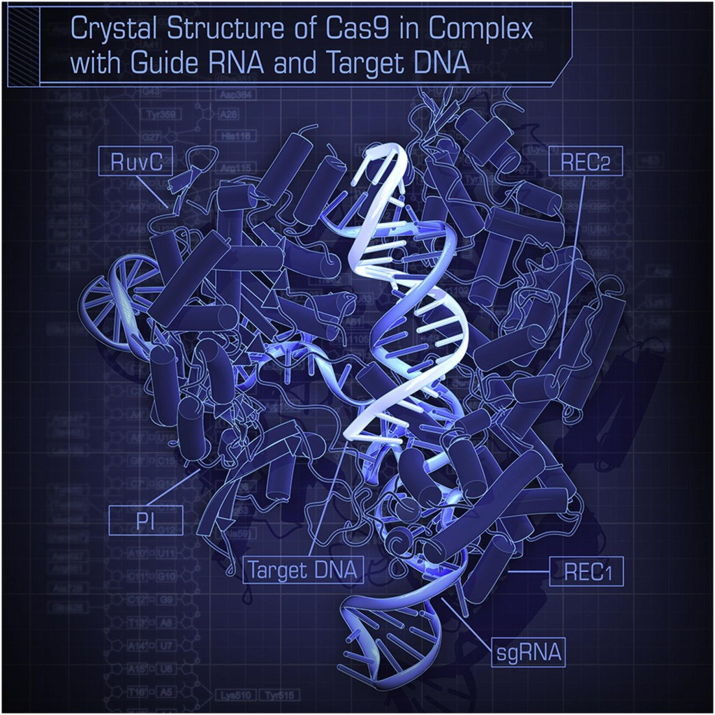 Crystal_Structure_of_Cas9_in_Complex_with_Guide_RNA_and_Target_DNA
