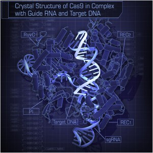 Crystal_Structure_of_Cas9_in_Complex_with_Guide_RNA_and_Target_DNA, CRISPR human embryos.