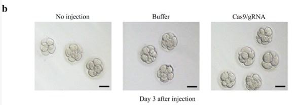 CRISPR human embryo Tang et al