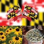 Guest Post from the Maryland Stem Cell Research Fund