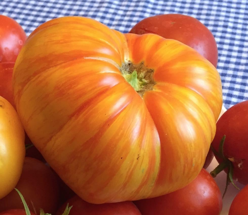 Beauty King Tomato