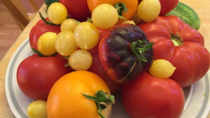 tomatoes Sacramento