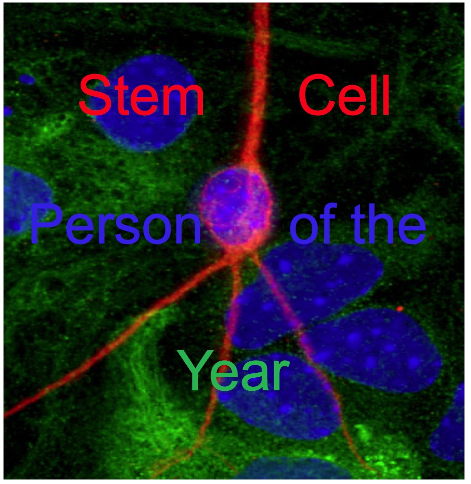 Stem Cell Person Of The Year 2013 Elena Cattaneo The Niche