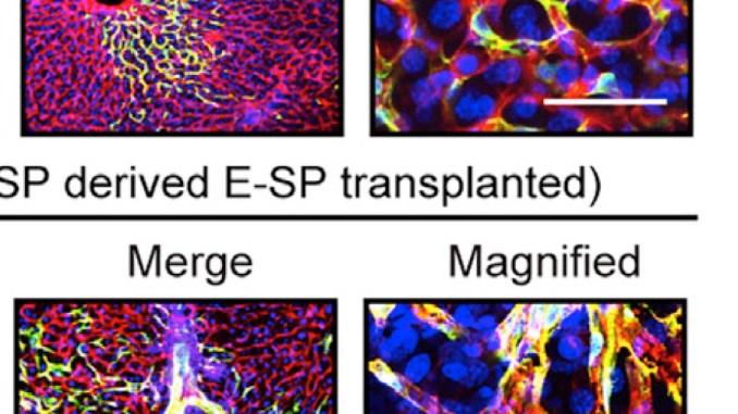 Wakabayashi, et al. Cell Stem Cell Figure 1F