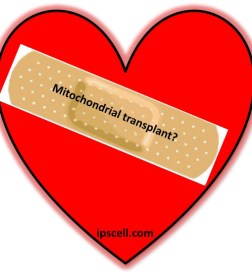 mitochondrial transplant for heart