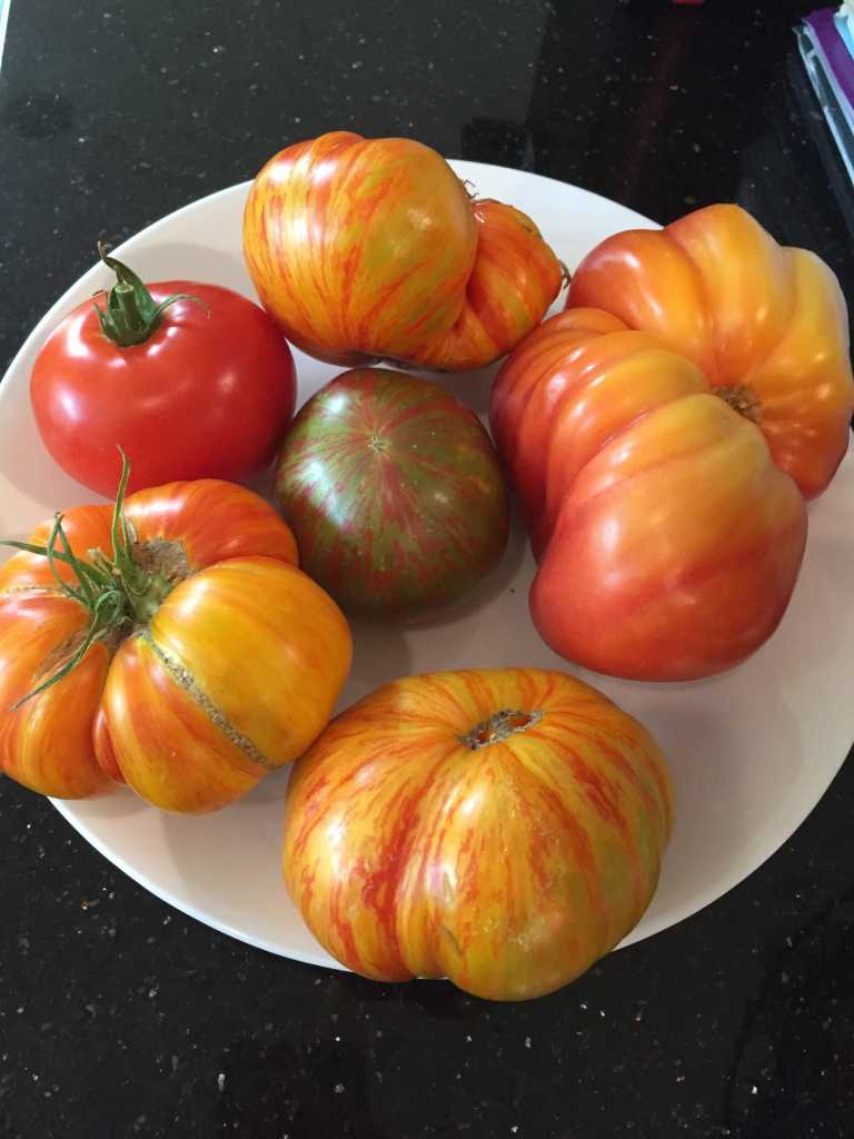 tomato-garden-Beauty-King-Lovers-Lunch